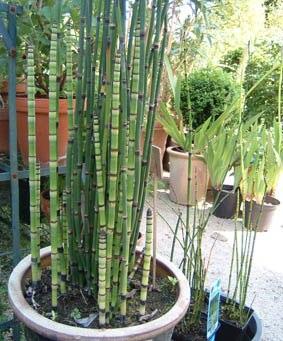 Vivaces e for Plantes japonaises exterieur